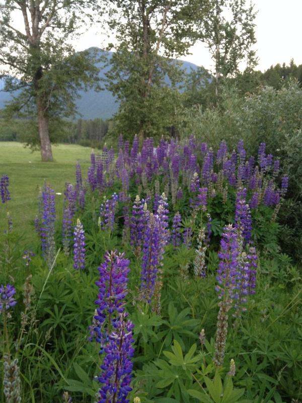 Wildflowers at GVR