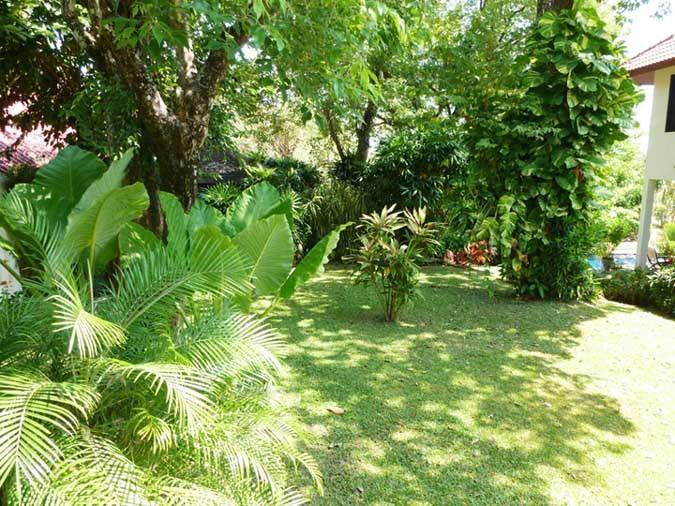 View of upper level back garden
