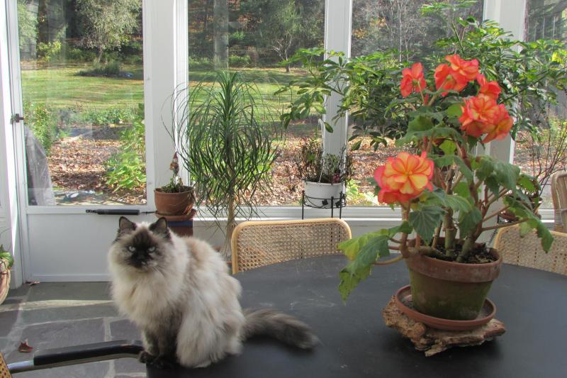 Pandora genieten van de warmte onder de Garden Room dakraam