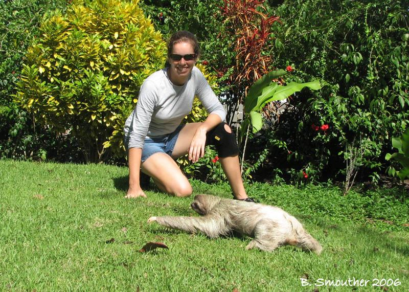a sloth in the yard
