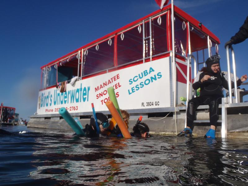 Nadar con manatíes con submarino de pájaro con descuento con Alquiler de casa