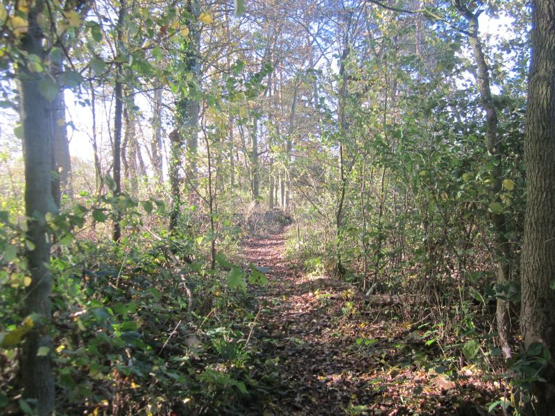 Woodland walks at Kilnwick Percy