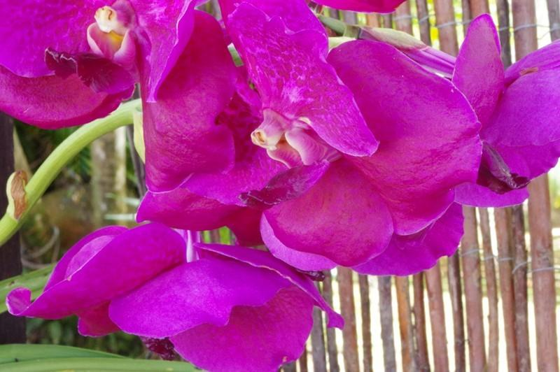 orchidée sur la terrasse