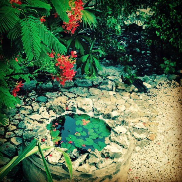 Small Lilly pond in the garden