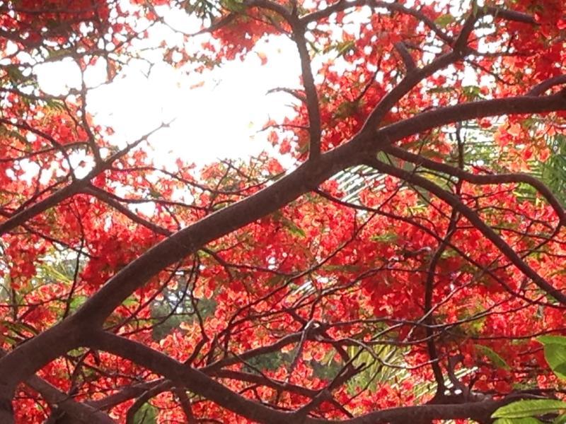 Flores de mayo-Nov, increíble la llama