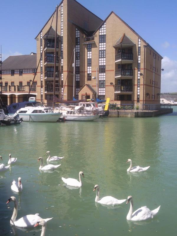 Set in lovely Quay perfect for bird watching. Swans often frequent