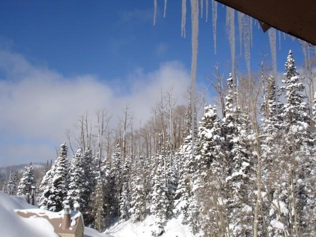 Enjoy a winter wonderland. Enchanting forest views form every window.