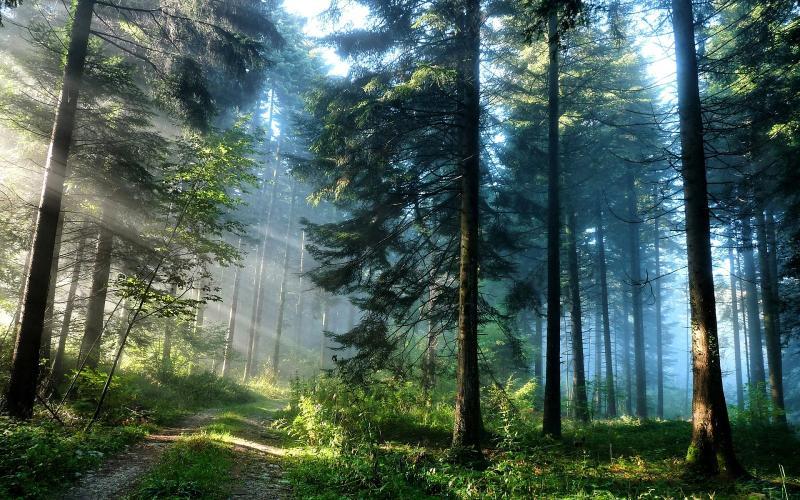A floresta de pinheiros de resfriamento da serra Kyrenia, localizado a apenas 10 minutos de sua casa
