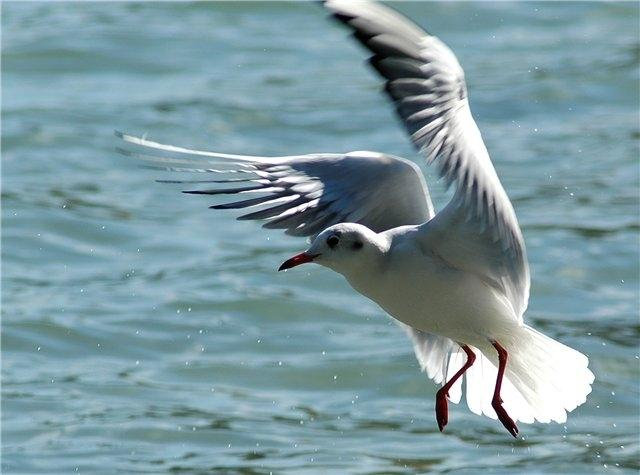 Apartment Seagull, holiday rental in Varna