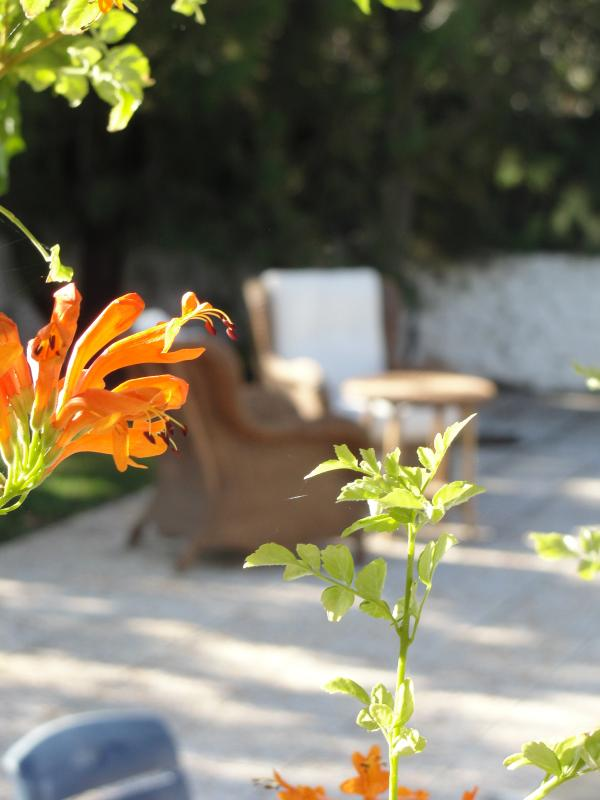 View from Garden Veranda