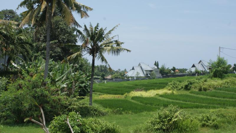 Vue de riz paddy