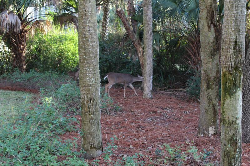 Dieren in het wild wemelt net buiten de deur