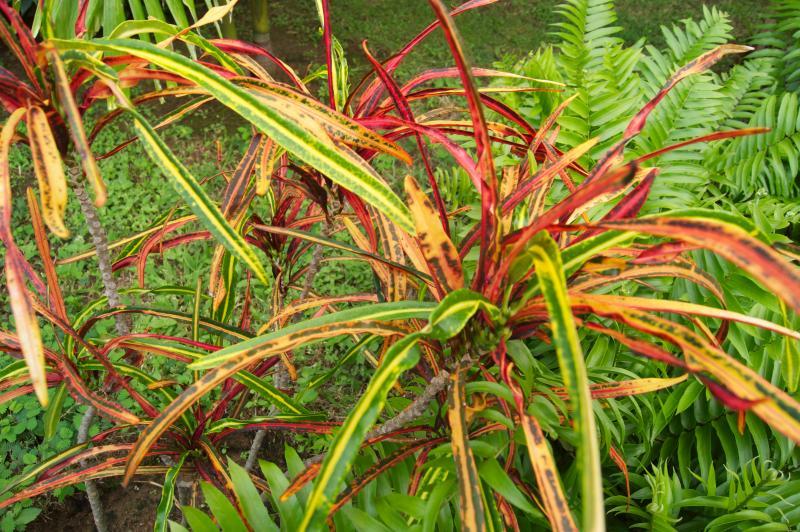 Tropical Plantings