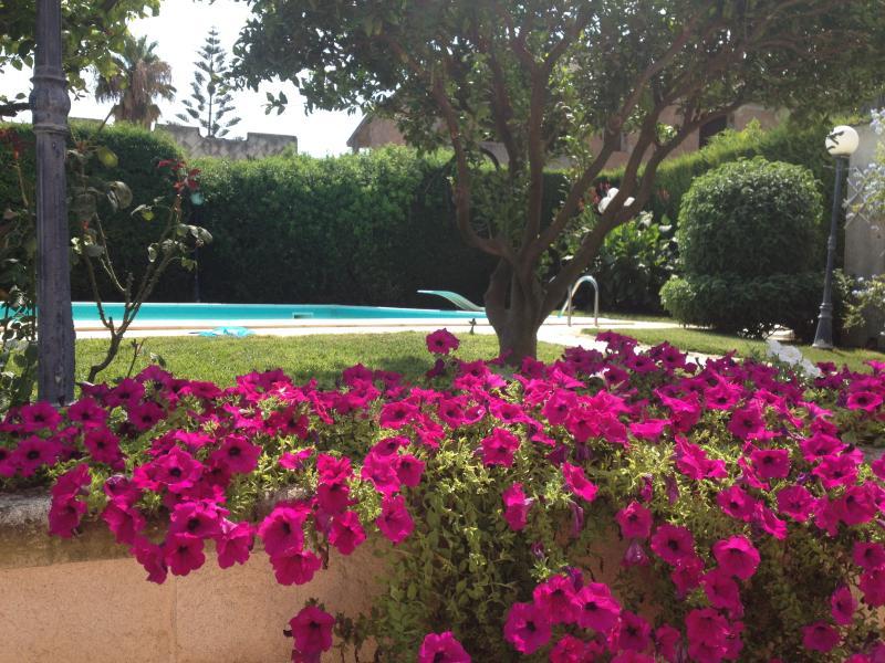 Flowers in Mediterranean