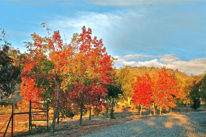 Ranch Fall
