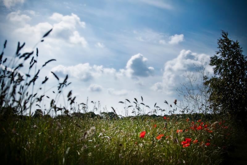 De grands espaces ouverts, de l'air frais et un ciel clair - l'évasion Perfect Suffolk!