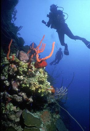 Great Scuba Diving with a few dive companies available on St. Kitts and Nevis.