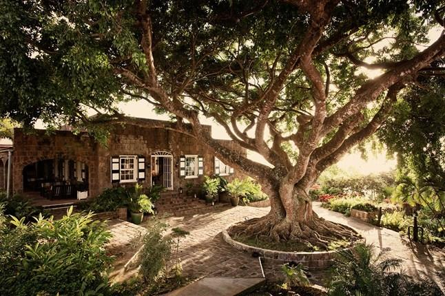 Montpelier  Plantation Hotel on Nevis. A must stop on your island tour. Great Rum Punch and lunch.