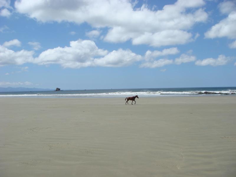 expansive beaches