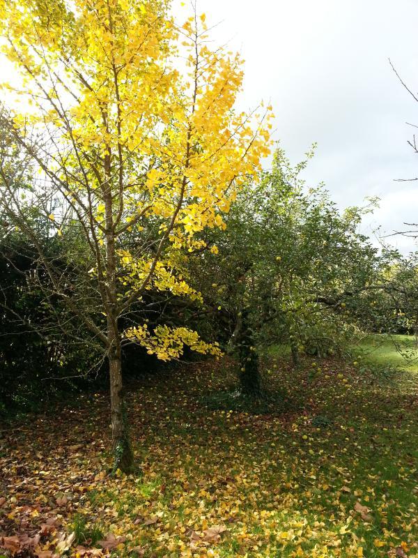 En el jardín: otoño y sus colores agradables.