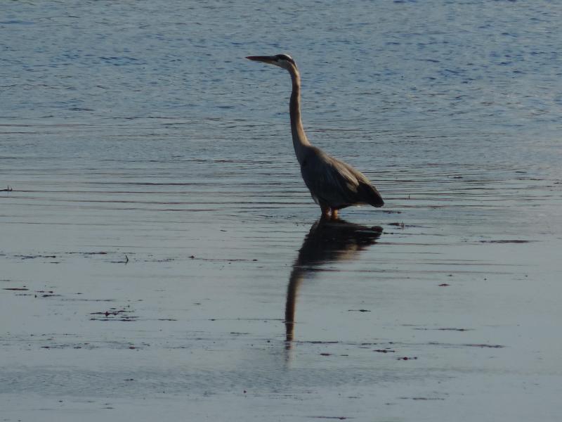 Si te gusta de Heron, entonces tienes que visitar nuestras casas rurales en waterfrontcanada.ca