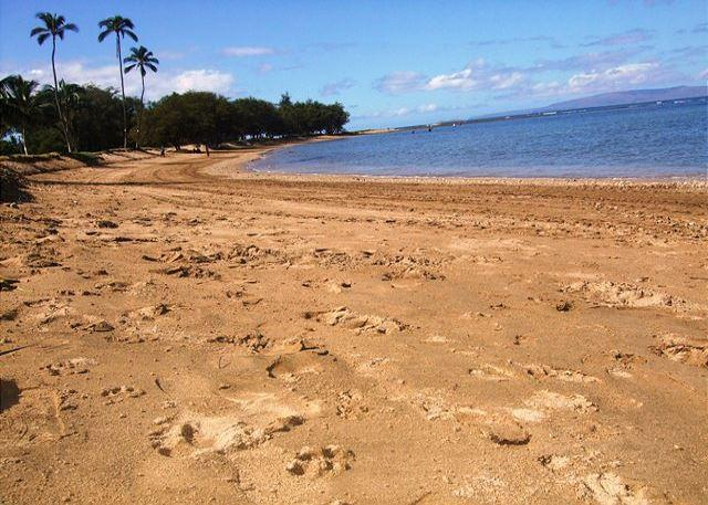 Beach In Front Of Menehune Shores