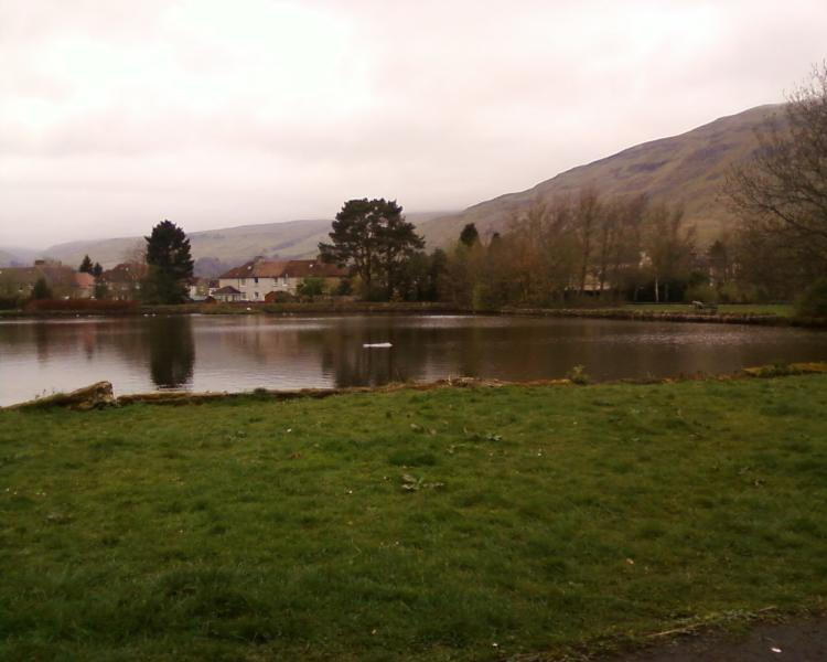 Whitefield Park, Lennoxtown - ducks to feed, swans to watch!
