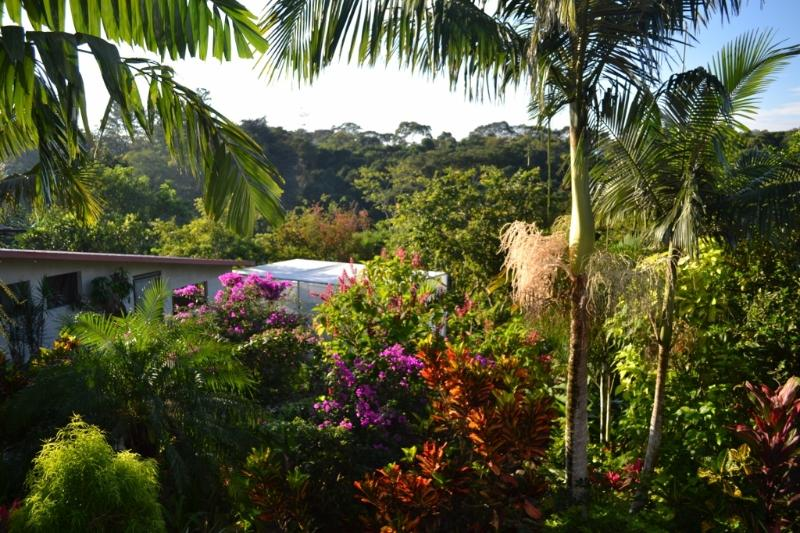 Garden view from Guesthouse