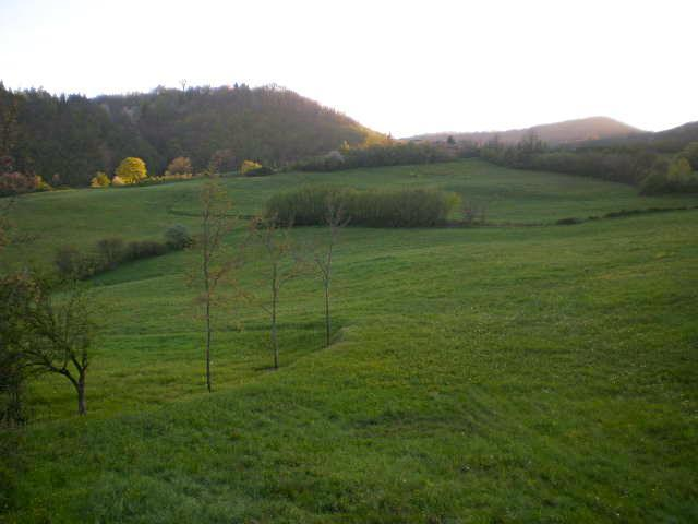 Meadow and forest - view from the living room