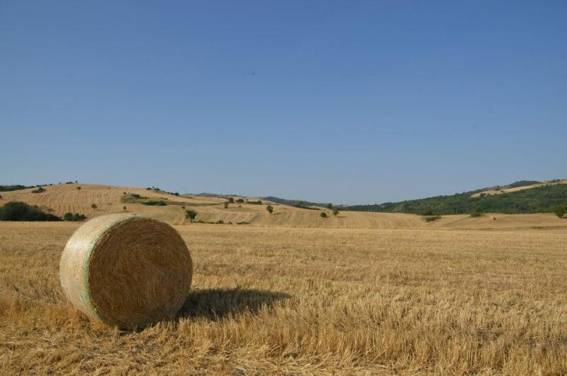 July is hay-cutting month in Calitri - at this time of year Campania has a beautiful golden glow