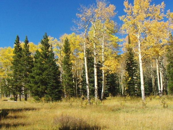 Tremble dans Rocky Mountain National Park