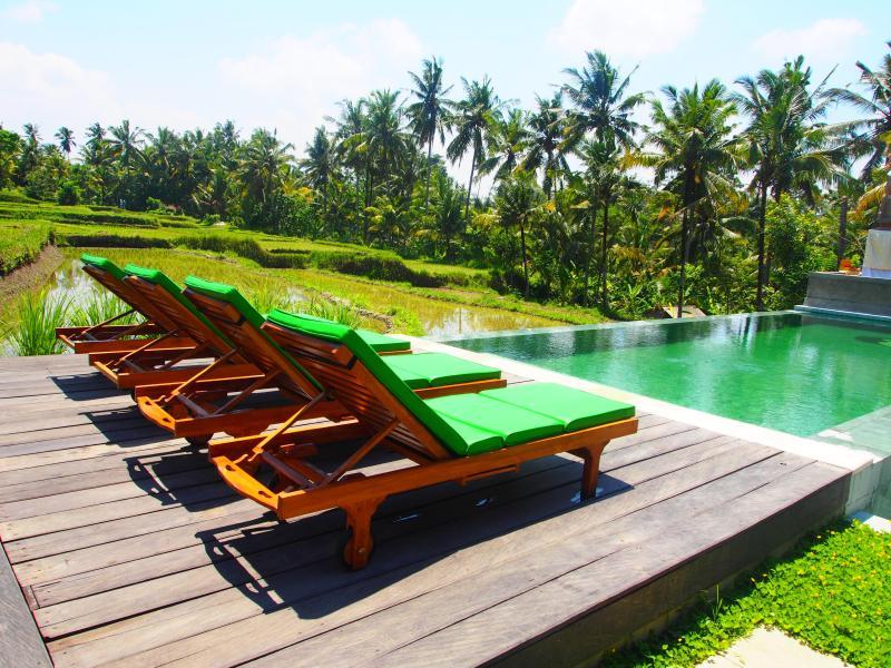Infinity Edge Pool overlooking rice field