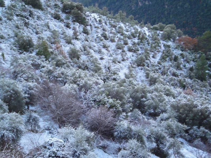 Nieve en el valle