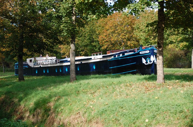 magnolia navigue paisiblement sur le canal