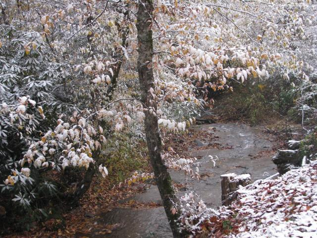 Oct. 31, 2014 first snowfall of the year. This is the creek in the backyard