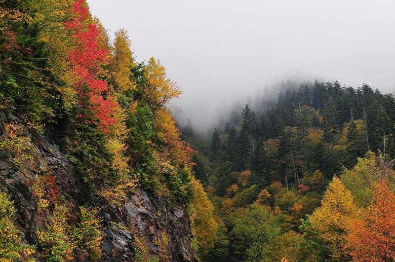 Beautiful Fall colors with the snow coming in the background