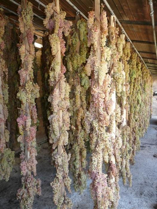 wine grapes drying in an open room
