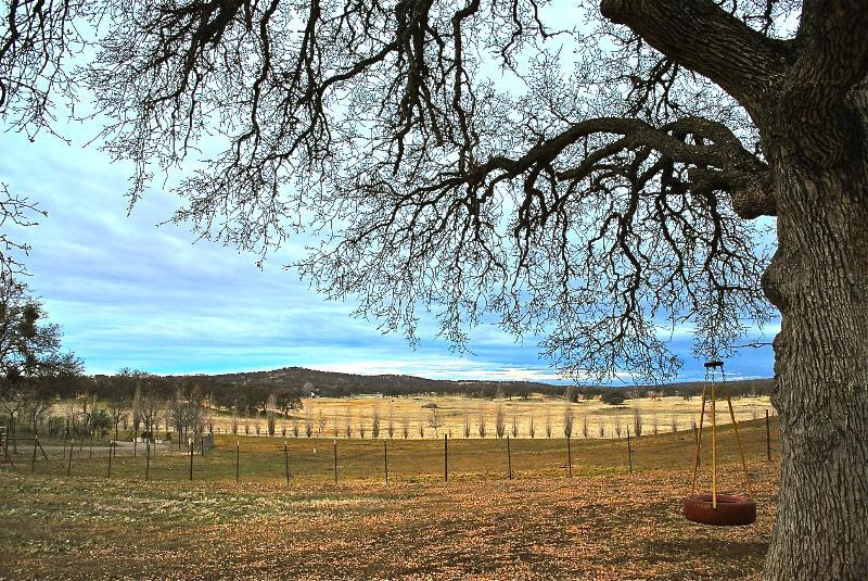 Big Oak Swings and Views