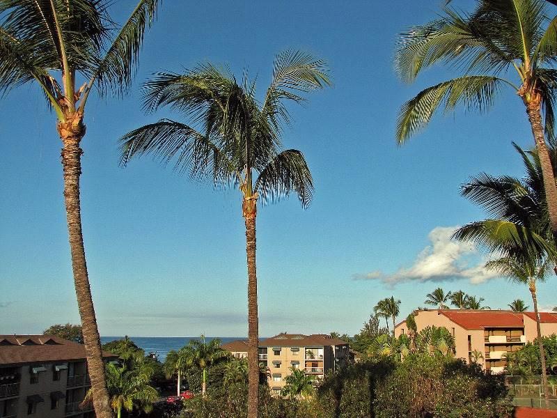 Palm Tree,Tree,Building,Villa,Grass