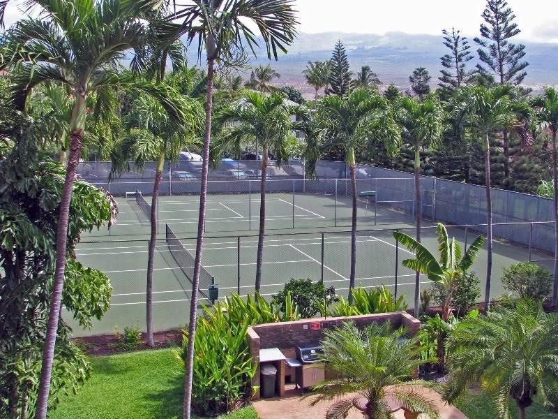 Tree,Fir,Greenhouse,Palm Tree,Yard