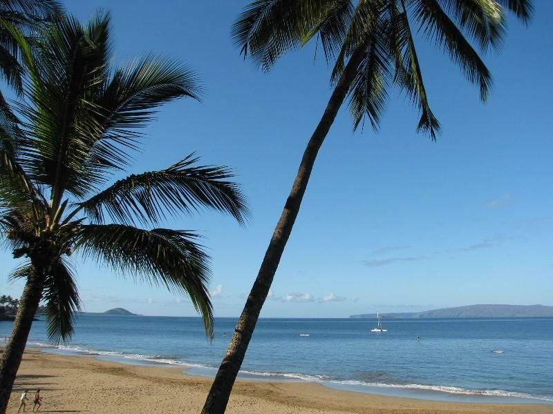 Palm Tree,Tree,Beach,Coast,Outdoors