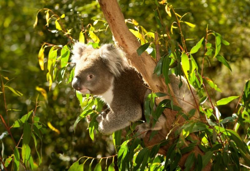The famous Healesville wildlife sanctuary-5 minutes drive from the Cottage.