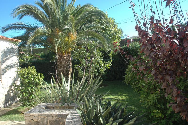 Beau jardin autour de la maison