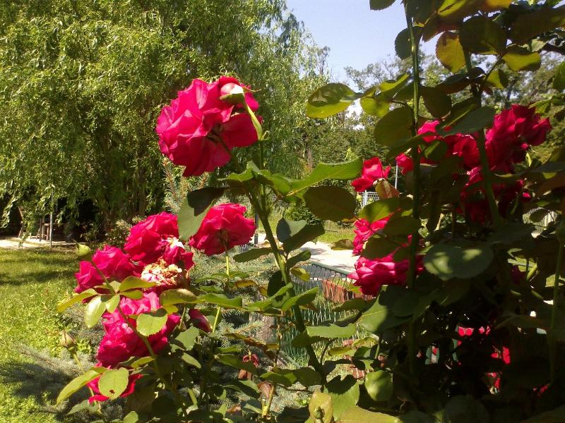 ... with a view on the nice roses ...