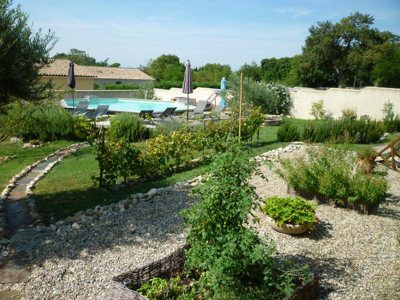 The herb garden, some of our vines, and the pool in the background