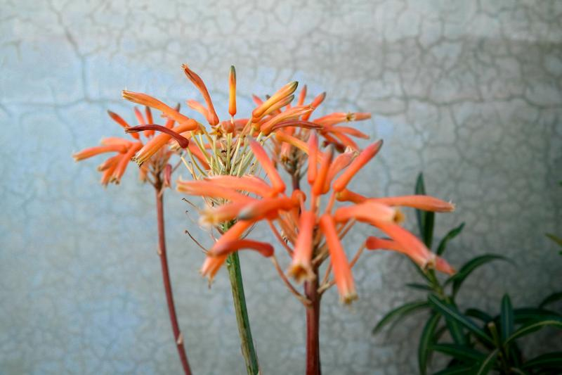 Flower on Roof Terrace