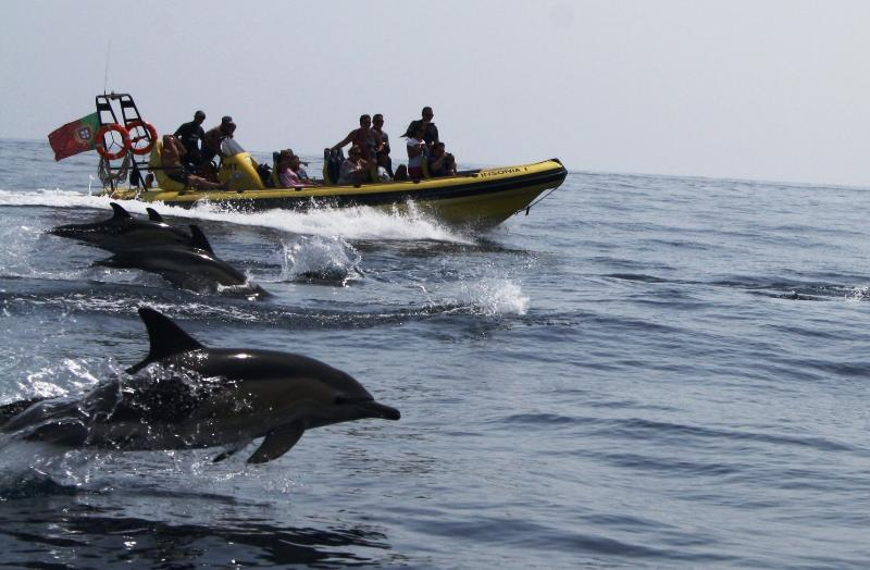 Dolphin Watching - and much more outdoor activities...