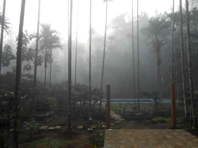 Misty Morning at Glendale