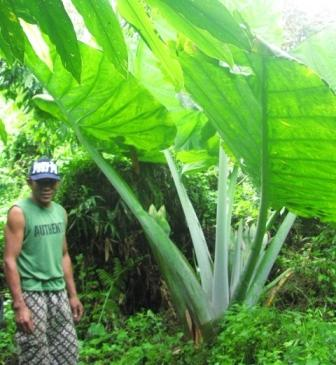 Irwan, an experienced Orangutan trekker.