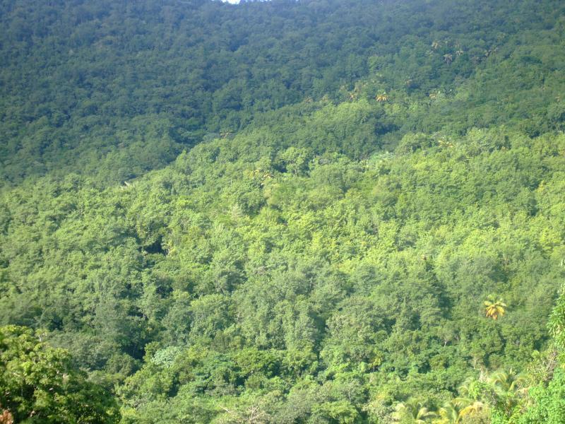 Bahía de Marigot ladera